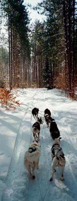 Dogsledding in the UP - Click to Enlarge